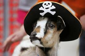 """Surfing Goat Dairy - If pirate goats were real, would they say """"Baa-rgh,  mateys""""? 🤔🐐 